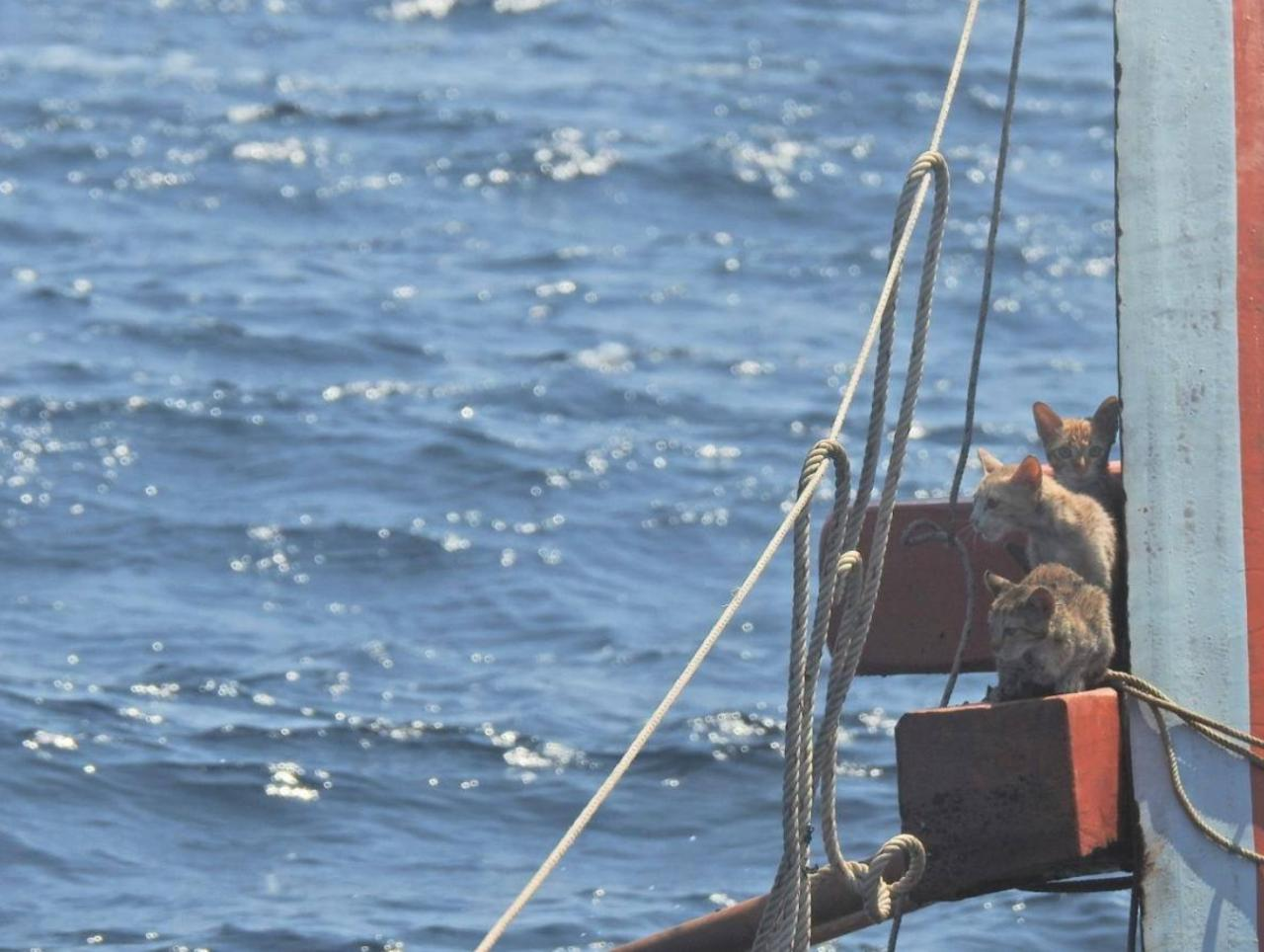 Ingat Tiada 'Mangsa' Tertinggal, Penyelamat Perasan Ada 4 Ekor Kucing Berada Di Kapal Kebakaran Di Tengah Laut